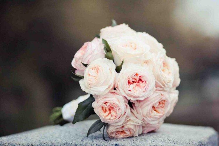 Изображение - Поздравления племяннице со свадьбой 18161.750x500.1533719146