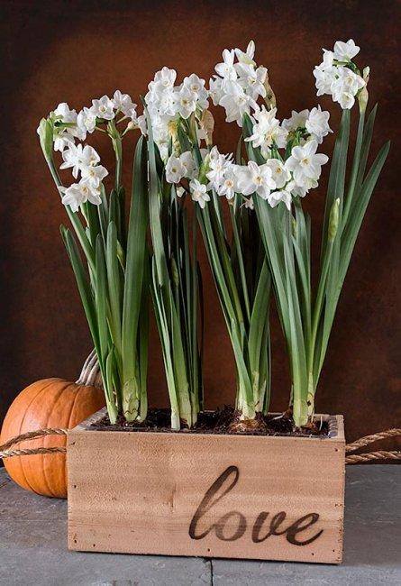 Цветочки в кадках